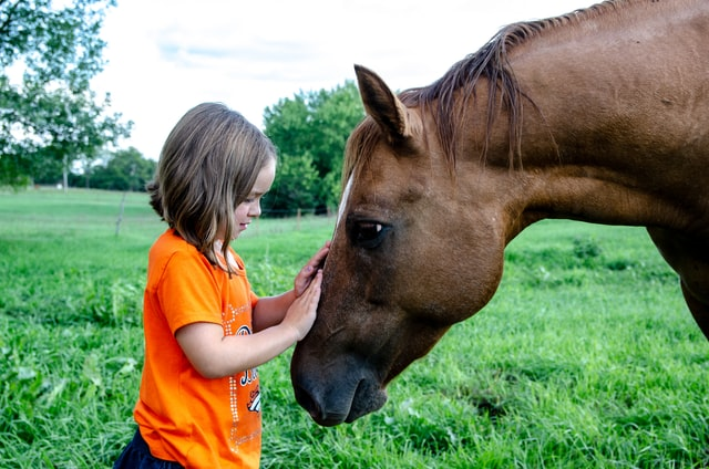 """Autistic girls often have """"special interests"""" that are socially typical but more intense than their neurotypical peers. {Image: Young girl with short brown hair wearing an orange shirt, in profile. She is petting the nose of a brown horse.}"""